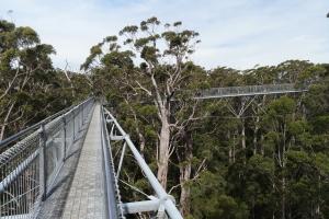 Canopy walkways