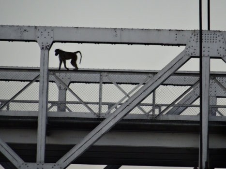 Otto Beit Bridge