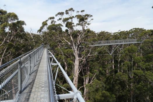 Valley of the Giants Treetop Walk