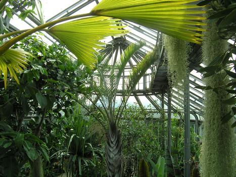 Jardin botanique de BerlinSerre F