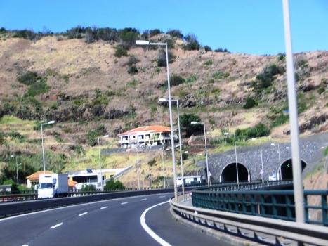 Tunnel Palmeira