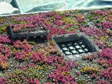 Dieses Leichtdach gilt mit seinem schlanken Aufbau (das Substrat kommt direkt auf die Dränageschicht) als Minimallösung; der Vorteil: Im Sommer wird es wärmer und somit schneller trocken