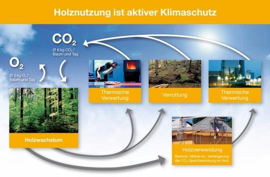 Pro Tag nimmt ein Baum im Wald rund 6 kg Kohlendioxid auf und gibt im gleichen Zeitraum 5 kg Sauerstoff an die Atmosphäre ab. Gespeichertes CO 2 bleibt im Holz nach dessen Verarbeitung zu Bauprodukten gebunden. Am Ende der Nutzung lassen sich Holzprodukte wie z.B. Holzfaserdämmstoffe klimaneutral kompostieren oder thermisch verwerten.