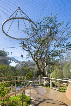 A specially inverted pull ring was installed over the very rare camel-thorn tree that could not be moved.  : A specially inverted pull ring was installed over the very rare camel-thorn tree that could not be moved.