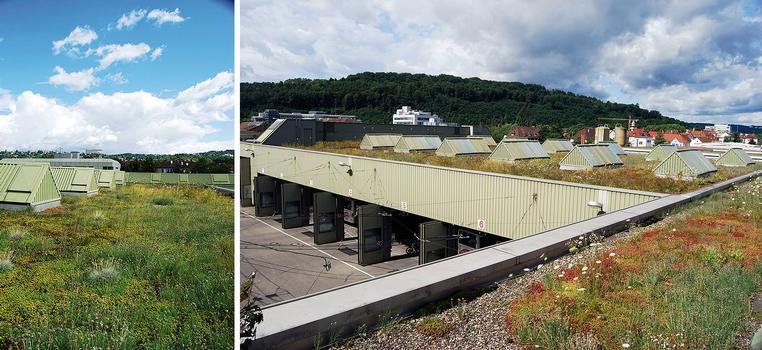 Richtig geplant: auch nach drei Jahrzehnten ist diese Dachbegrünung der Verkehrswerke Esslingen voll funktionsfähig und erfüllt alle Erwartungen