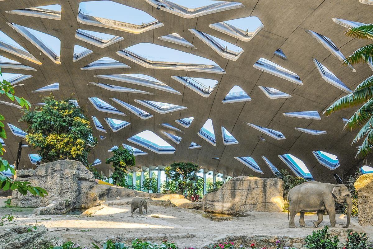 Innenansicht des Elefantenhauses und der imposanten Holzdachkonstruktion