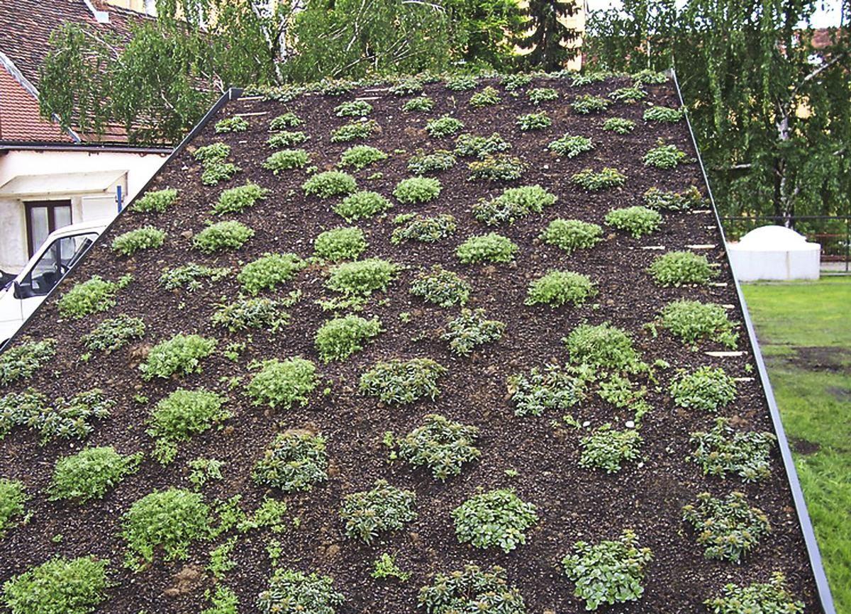 Die Substratmischung aus Liadrain und Schwarztorf sorgt auch in den heißen kroatischen Sommern für ein gesundes Pflanzenwachstum